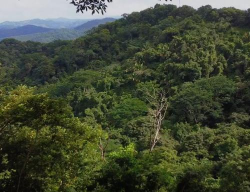 Costa Rica gana premio internacional por conservación ambiental pero ¿Qué pasa en Nosara?
