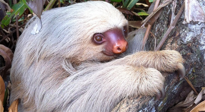The Inaturalist App: the Recent Nosara Wildlife Observations  Will Blow Your Mind!